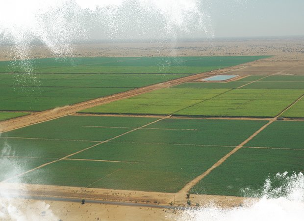 Large irrigation projects