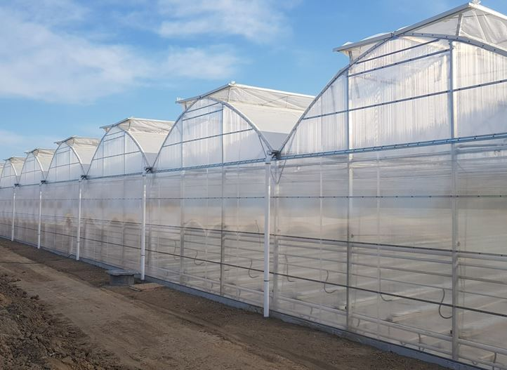 greenhouse for medical cannabis growing with roof ventilation and light structure by Netafim greenhouse projects. Especially fit for warmer climates where a polyhouse is preferred over a glass house